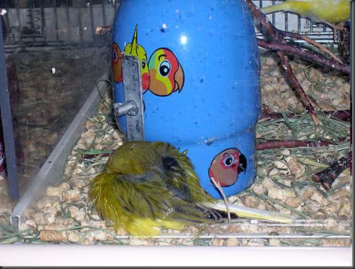 Petsmart Parrots Wwwimagessurecom